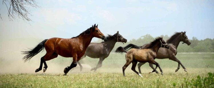 Naszą pasją są konie